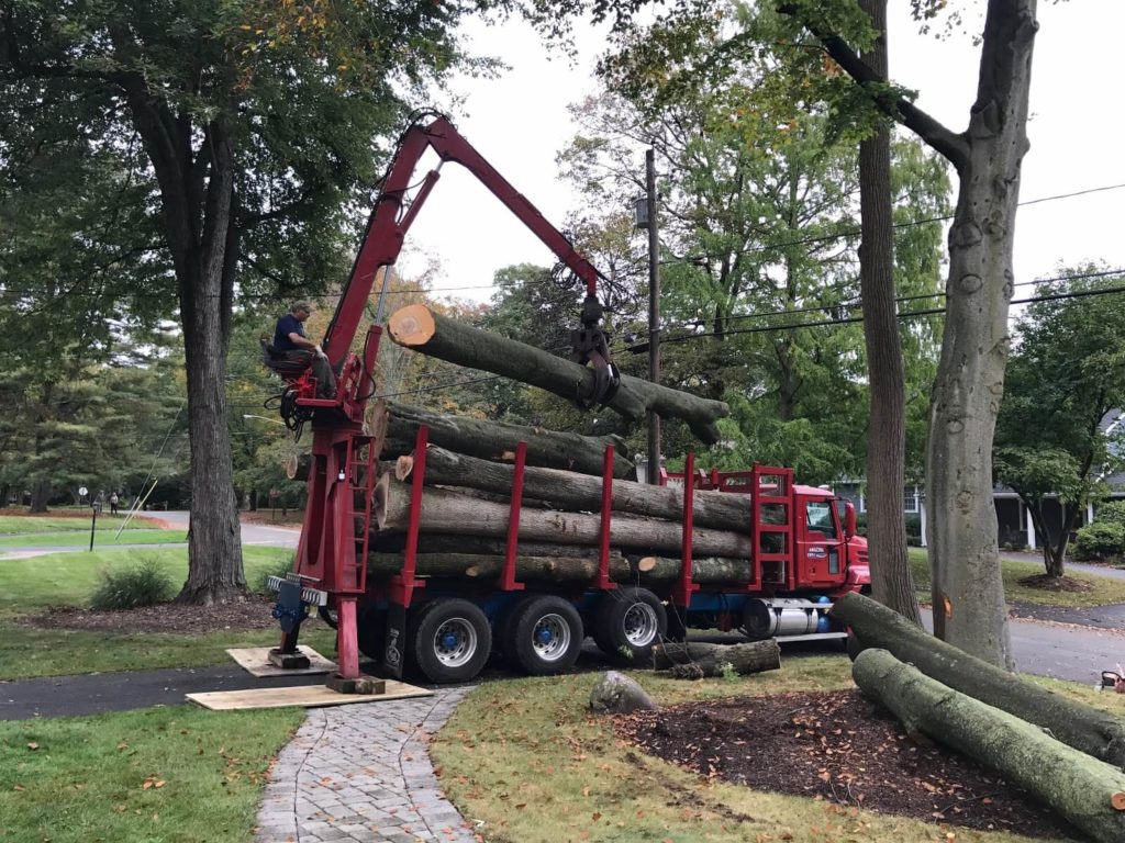 Commercial Tree Services-Henderson's Complete Tree Services-We Offer Tree Trimming Services, Tree Removal, Tree Pruning, Tree Cutting, Residential and Commercial Tree Trimming Services, Storm Damage, Emergency Tree Removal, Land Clearing, Tree Companies, Tree Care Service, Stump Grinding, and we're the Best Tree Trimming Company Near You Guaranteed!