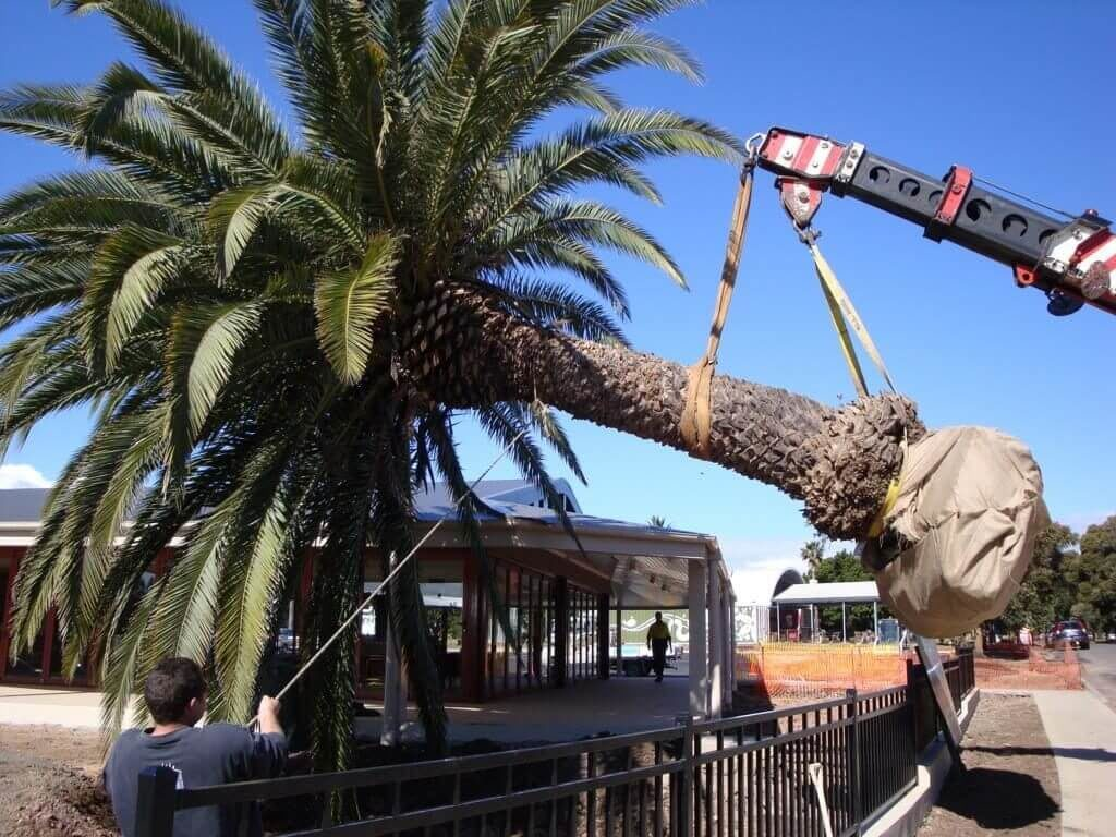 Palm Tree Removal-Henderson's Complete Tree Services-We Offer Tree Trimming Services, Tree Removal, Tree Pruning, Tree Cutting, Residential and Commercial Tree Trimming Services, Storm Damage, Emergency Tree Removal, Land Clearing, Tree Companies, Tree Care Service, Stump Grinding, and we're the Best Tree Trimming Company Near You Guaranteed!
