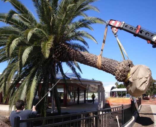 Palm Tree Trimming and Removal-Henderson's Complete Tree Services-We Offer Tree Trimming Services, Tree Removal, Tree Pruning, Tree Cutting, Residential and Commercial Tree Trimming Services, Storm Damage, Emergency Tree Removal, Land Clearing, Tree Companies, Tree Care Service, Stump Grinding, and we're the Best Tree Trimming Company Near You Guaranteed!