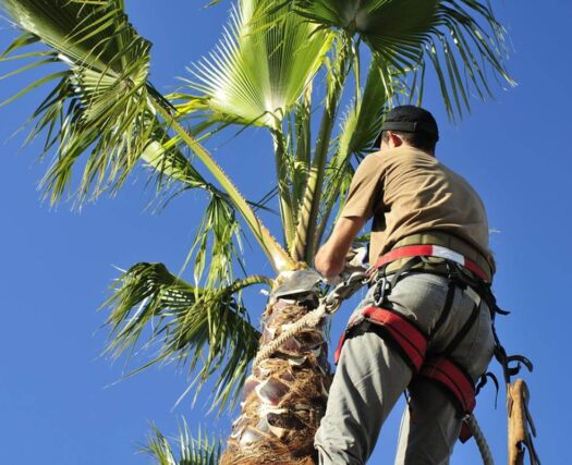 Palm Tree Trimming-Henderson's Complete Tree Services-We Offer Tree Trimming Services, Tree Removal, Tree Pruning, Tree Cutting, Residential and Commercial Tree Trimming Services, Storm Damage, Emergency Tree Removal, Land Clearing, Tree Companies, Tree Care Service, Stump Grinding, and we're the Best Tree Trimming Company Near You Guaranteed!
