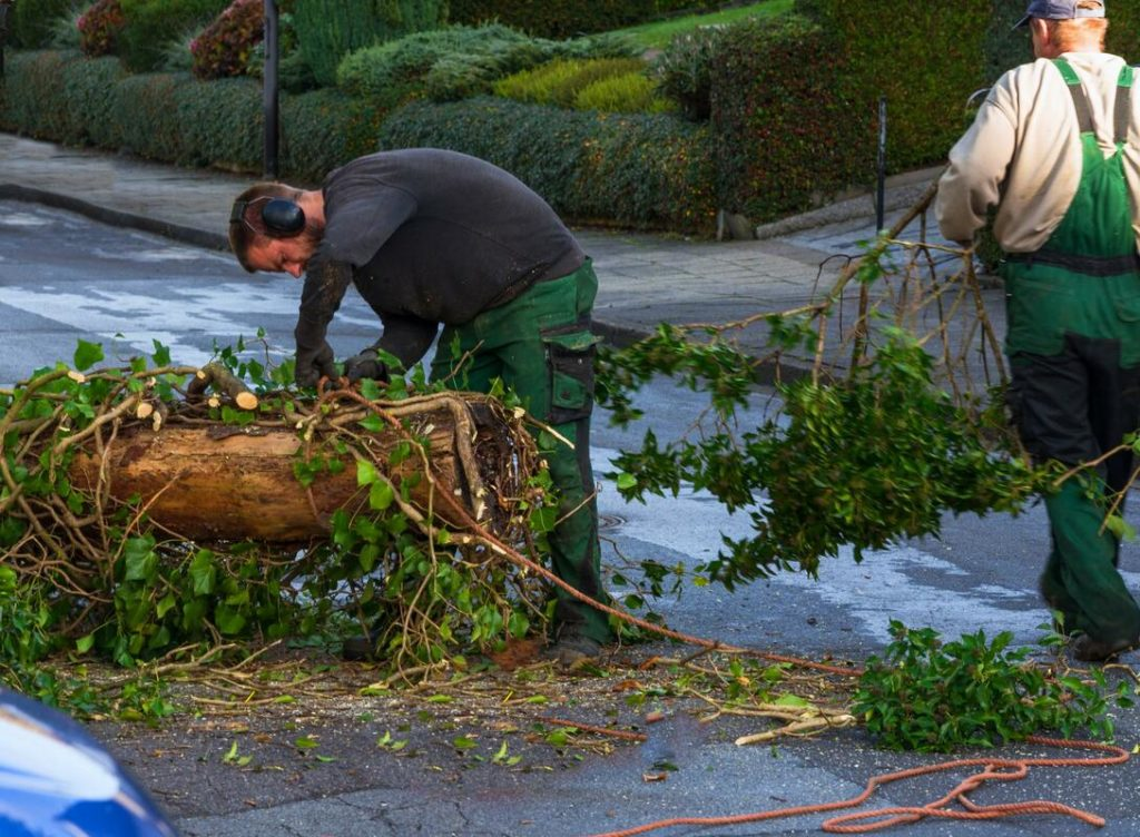 Services-Henderson's Complete Tree Services-We Offer Tree Trimming Services, Tree Removal, Tree Pruning, Tree Cutting, Residential and Commercial Tree Trimming Services, Storm Damage, Emergency Tree Removal, Land Clearing, Tree Companies, Tree Care Service, Stump Grinding, and we're the Best Tree Trimming Company Near You Guaranteed!