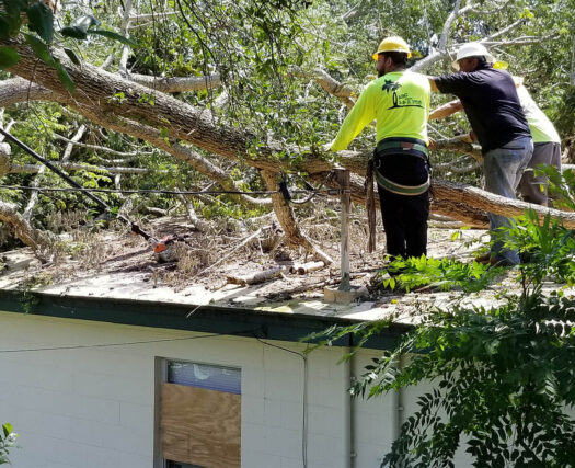 Storm Damage-Henderson's Complete Tree Services-We Offer Tree Trimming Services, Tree Removal, Tree Pruning, Tree Cutting, Residential and Commercial Tree Trimming Services, Storm Damage, Emergency Tree Removal, Land Clearing, Tree Companies, Tree Care Service, Stump Grinding, and we're the Best Tree Trimming Company Near You Guaranteed!