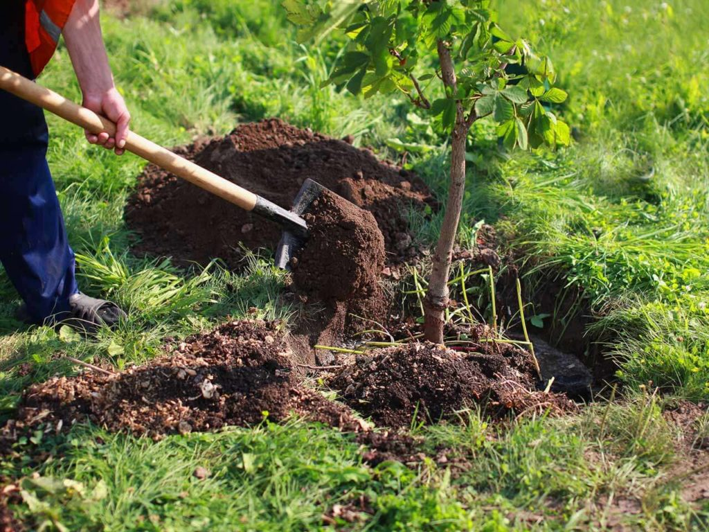 Tree Planting-Henderson's Complete Tree Services-We Offer Tree Trimming Services, Tree Removal, Tree Pruning, Tree Cutting, Residential and Commercial Tree Trimming Services, Storm Damage, Emergency Tree Removal, Land Clearing, Tree Companies, Tree Care Service, Stump Grinding, and we're the Best Tree Trimming Company Near You Guaranteed!