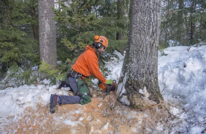 Tree Removal-Henderson's Complete Tree Services-We Offer Tree Trimming Services, Tree Removal, Tree Pruning, Tree Cutting, Residential and Commercial Tree Trimming Services, Storm Damage, Emergency Tree Removal, Land Clearing, Tree Companies, Tree Care Service, Stump Grinding, and we're the Best Tree Trimming Company Near You Guaranteed!