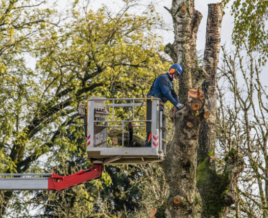 Tree Trimming-Henderson's Complete Tree Services-We Offer Tree Trimming Services, Tree Removal, Tree Pruning, Tree Cutting, Residential and Commercial Tree Trimming Services, Storm Damage, Emergency Tree Removal, Land Clearing, Tree Companies, Tree Care Service, Stump Grinding, and we're the Best Tree Trimming Company Near You Guaranteed!