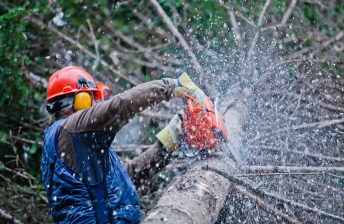 Boulder City-Henderson's Complete Tree Services-We Offer Tree Trimming Services, Tree Removal, Tree Pruning, Tree Cutting, Residential and Commercial Tree Trimming Services, Storm Damage, Emergency Tree Removal, Land Clearing, Tree Companies, Tree Care Service, Stump Grinding, and we're the Best Tree Trimming Company Near You Guaranteed!