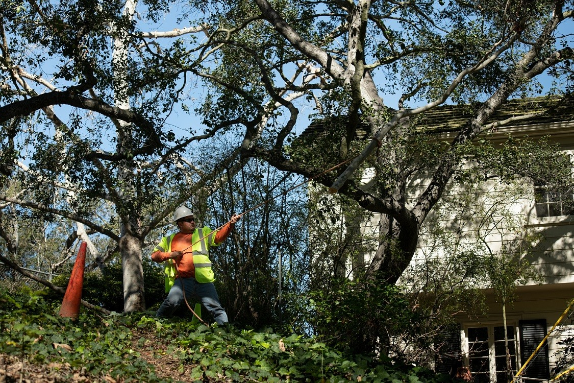 Sloan-Henderson's Complete Tree Services-We Offer Tree Trimming Services, Tree Removal, Tree Pruning, Tree Cutting, Residential and Commercial Tree Trimming Services, Storm Damage, Emergency Tree Removal, Land Clearing, Tree Companies, Tree Care Service, Stump Grinding, and we're the Best Tree Trimming Company Near You Guaranteed!